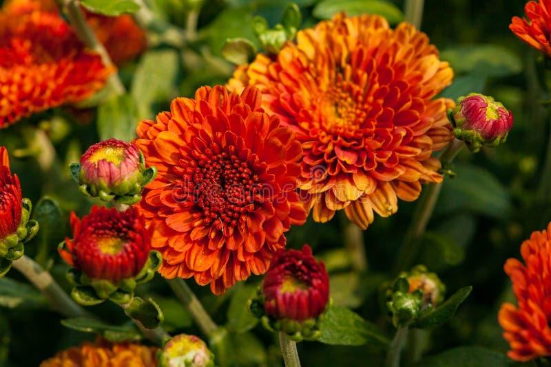 Λουλούδι στενό επάνω τώρα στοκ εικόνες
