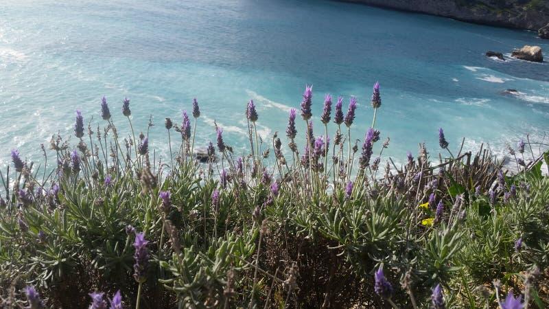 Λουλούδι στην παραλία στοκ εικόνα