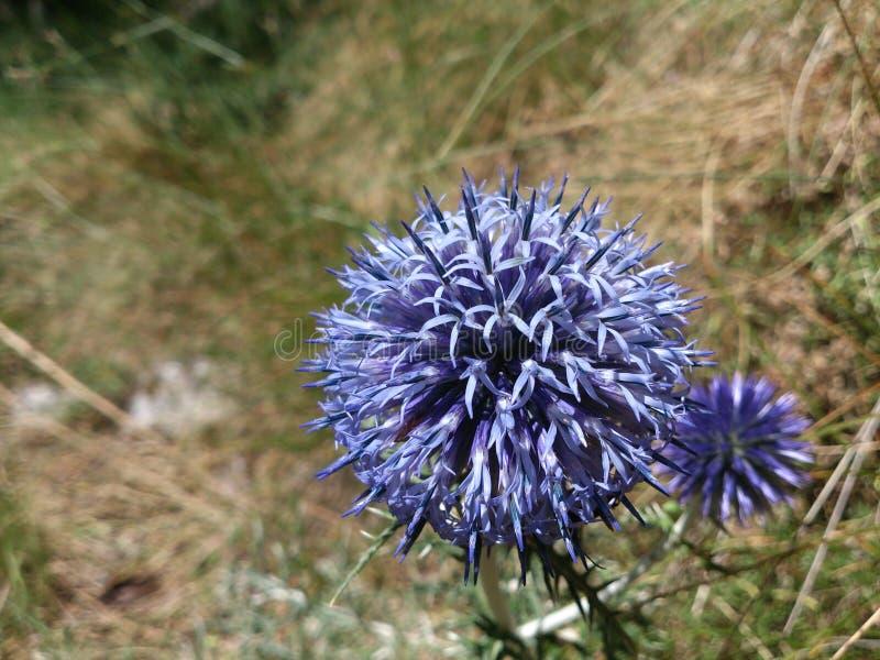 Λουλούδι στη χλόη στοκ εικόνες