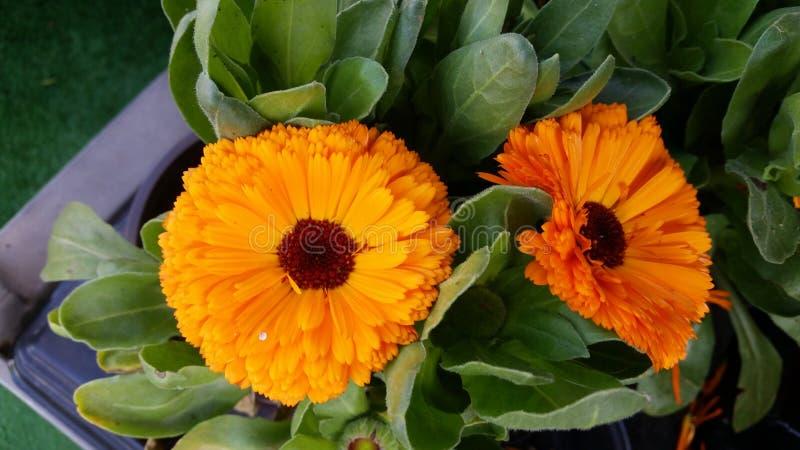 Λουλούδι στο κατάστημα στοκ φωτογραφία