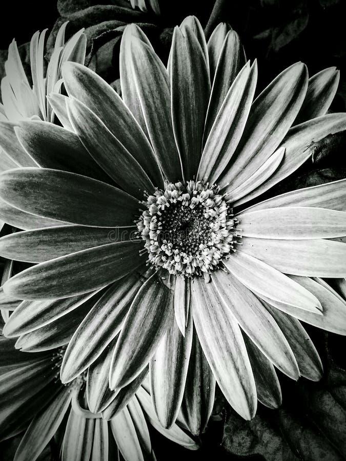 Λουλούδι στο Μπέρλινγκτον Ν Γ στοκ εικόνα