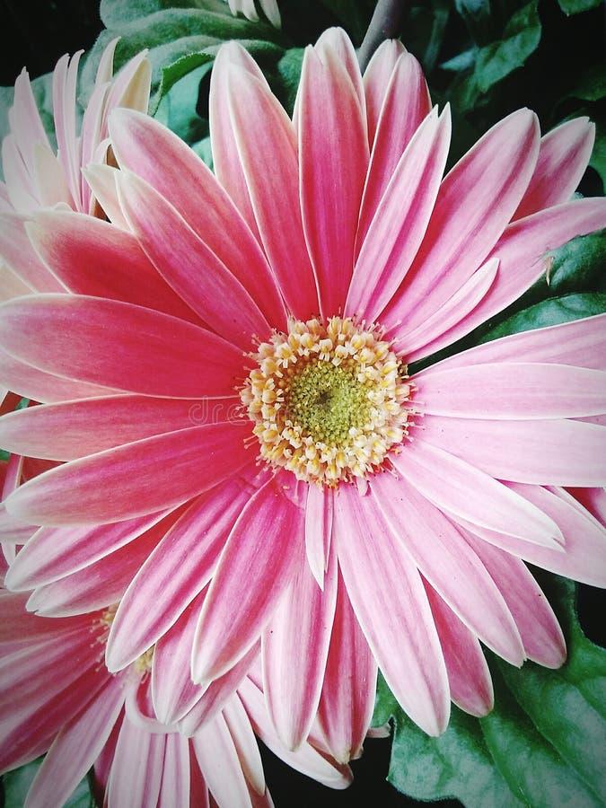 Λουλούδι στο Μπέρλινγκτον Ν Γ στοκ εικόνες