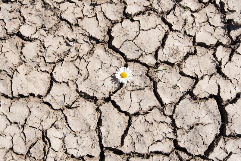 Λουλούδι στο ραγισμένο χώμα στοκ φωτογραφία με δικαίωμα ελεύθερης χρήσης
