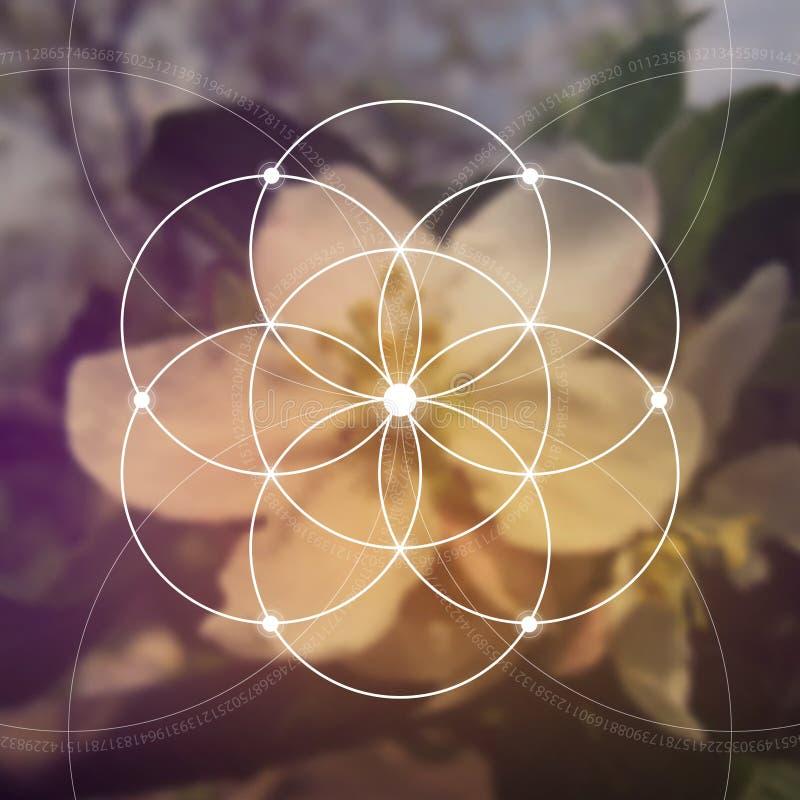 Λουλούδι της ζωής - το ενδασφαλίζοντας αρχαίο σύμβολο κύκλων γεωμετρία ιερή Μαθηματικά, φύση, και πνευματικότητα μέσα διανυσματική απεικόνιση