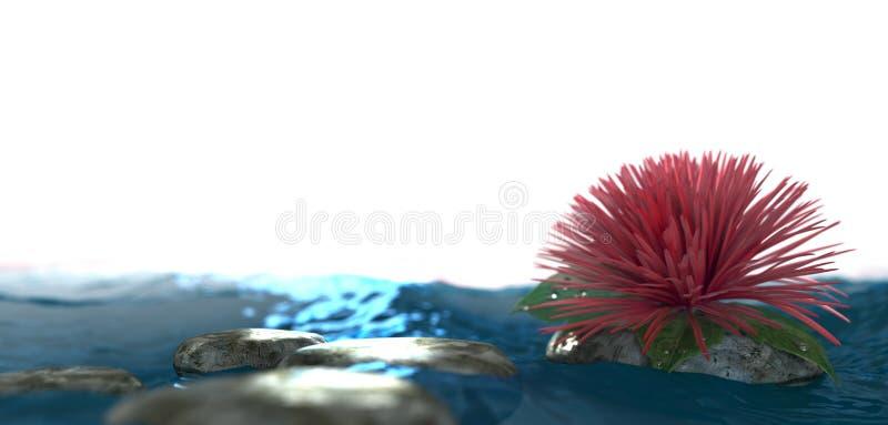 Λουλούδι υποβάθρου με την πέτρα στο νερό στοκ εικόνες