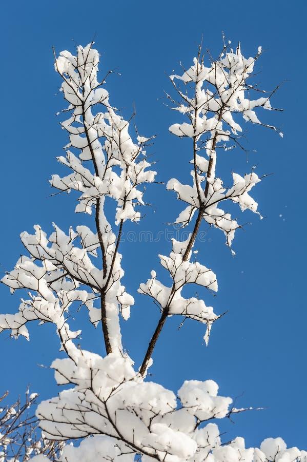 Λουλούδι χιονιού στα δέντρα στοκ φωτογραφία