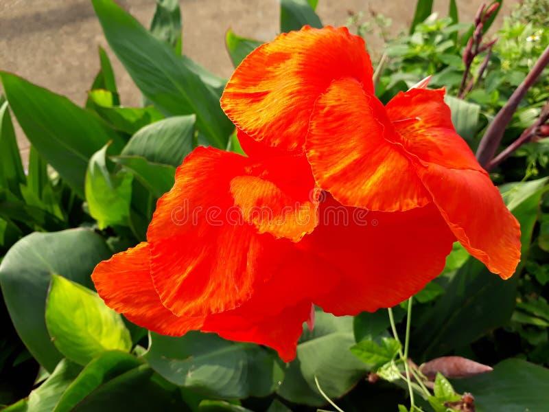 Λουλούδι στοκ εικόνες