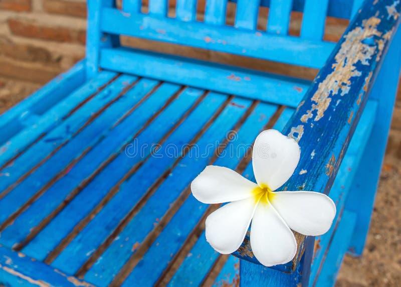 Λουλούδι Frangipani σε μια καρέκλα στοκ εικόνα