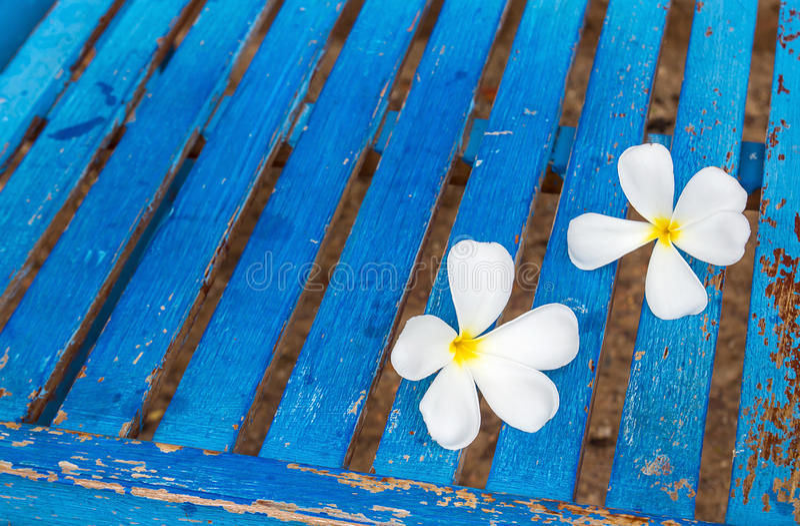 Λουλούδι Frangipani σε μια μπλε καρέκλα στοκ εικόνες