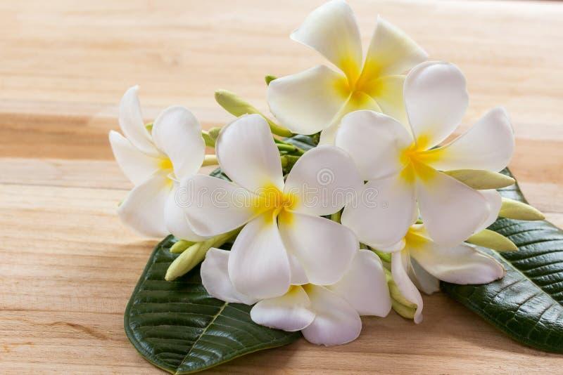 Λουλούδι Frangipani στον ξύλινο πίνακα στοκ εικόνα με δικαίωμα ελεύθερης χρήσης