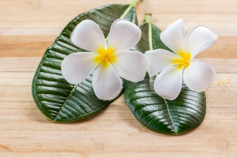Λουλούδι Frangipani στον ξύλινο πίνακα στοκ φωτογραφία με δικαίωμα ελεύθερης χρήσης