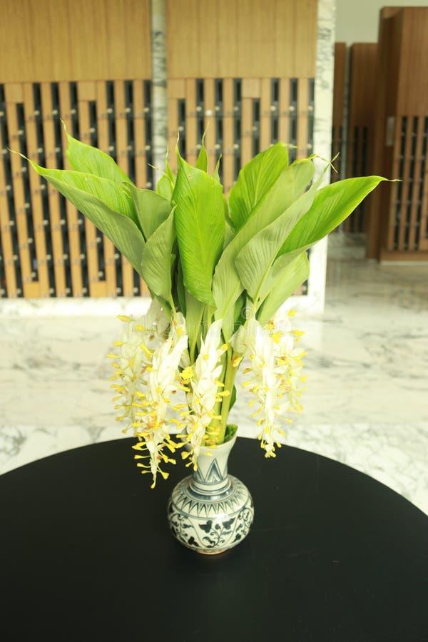 Λουλούδι Globba στοκ εικόνα