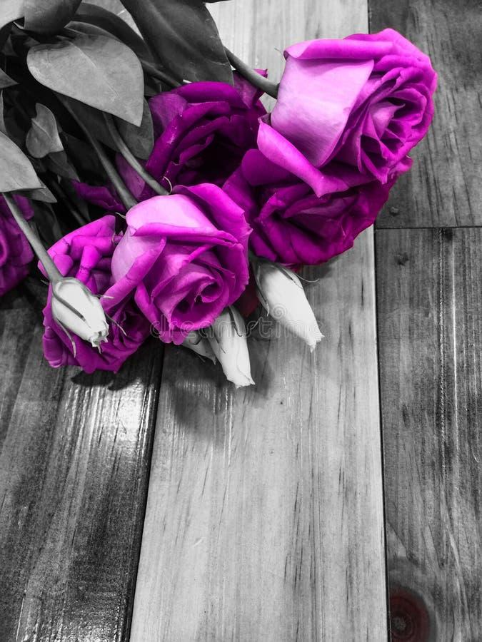 Λουλούδι Lysianthus στο ξύλινο υπόβαθρο στοκ φωτογραφία