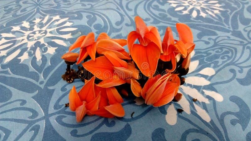 Λουλούδι Palas κοντά στο vatpara στοκ εικόνα με δικαίωμα ελεύθερης χρήσης