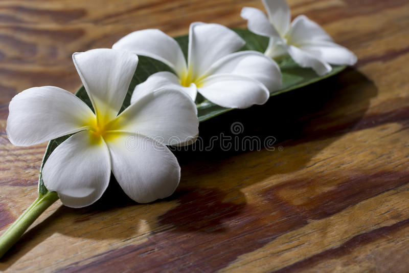 Λουλούδι Plumeria στο ξύλο στοκ εικόνες με δικαίωμα ελεύθερης χρήσης