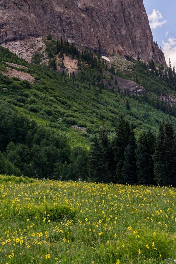 Λοφιοφόρα τοπίο και wildflowers βουνών του Κολοράντο λόφων στοκ εικόνες