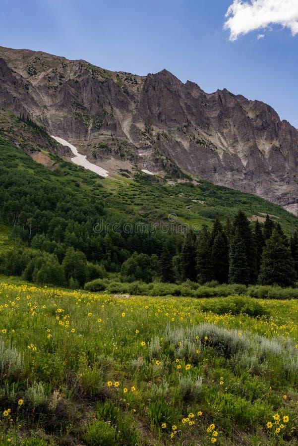 Λοφιοφόρα τοπίο και wildflowers βουνών του Κολοράντο λόφων στοκ εικόνες με δικαίωμα ελεύθερης χρήσης