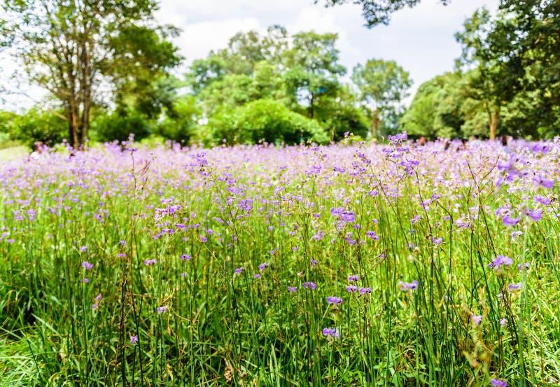 Λοφιοφόρος τομέας λουλουδιών φιδιών στοκ εικόνες με δικαίωμα ελεύθερης χρήσης