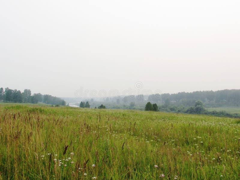Λοφώδες τοπίο με το πράσινο λιβάδι, δάσος στην απόσταση, ήρεμος ποταμός μια ομιχλώδη θερινή ημέρα στοκ φωτογραφίες