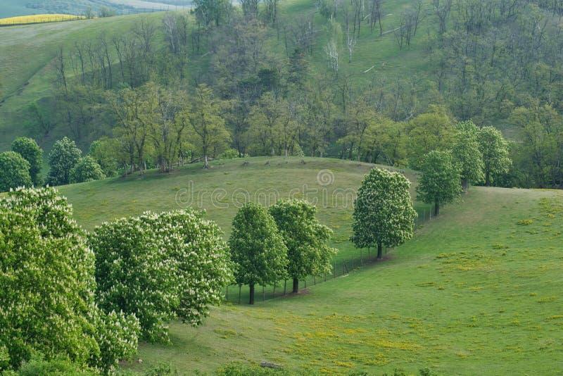 Λοφώδες τοπίο Moravian άνοιξη στοκ εικόνες