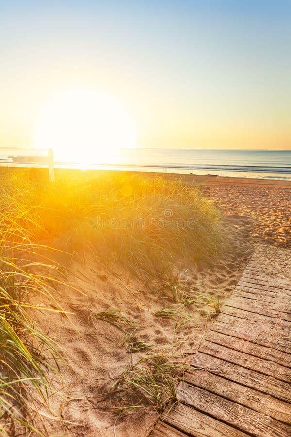 λούζει τον ήλιο αμμόλοφω& στοκ φωτογραφίες με δικαίωμα ελεύθερης χρήσης