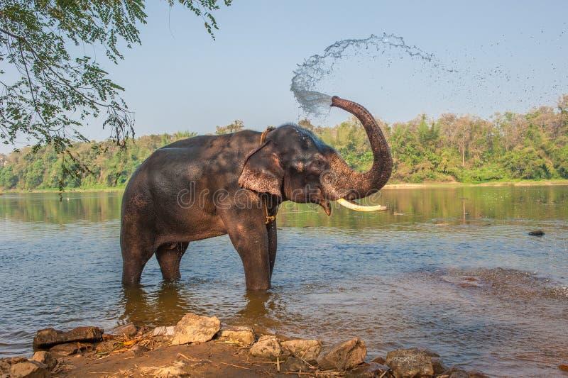 Λούσιμο ελεφάντων, Κεράλα, Ινδία στοκ φωτογραφία με δικαίωμα ελεύθερης χρήσης