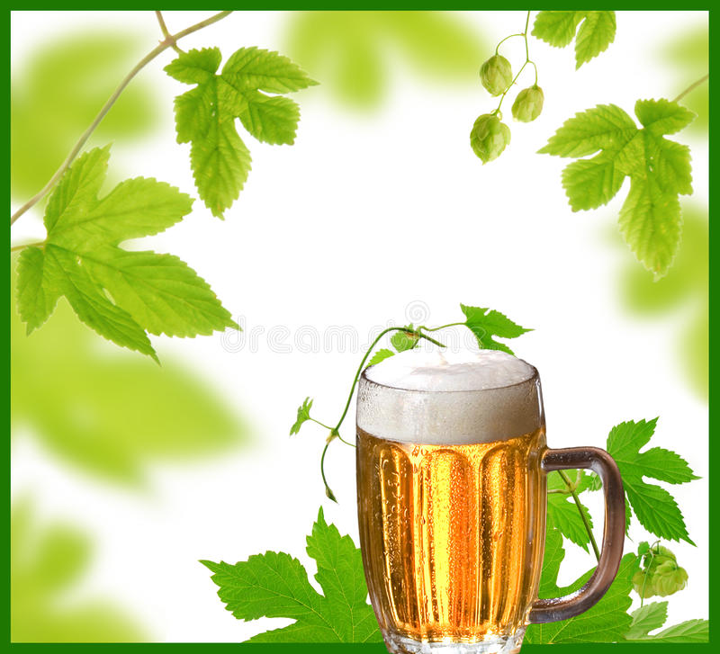λυκίσκοι σχεδίου μπύρα&sigma στοκ εικόνες με δικαίωμα ελεύθερης χρήσης
