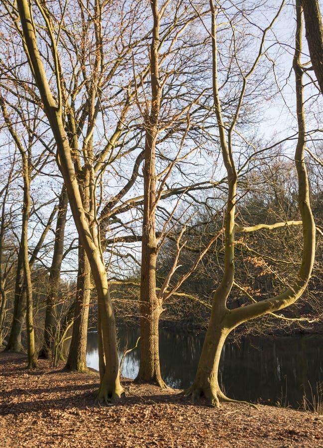 Λυκόφως στο δάσος με τον ποταμό ως υπόβαθρο στοκ εικόνες