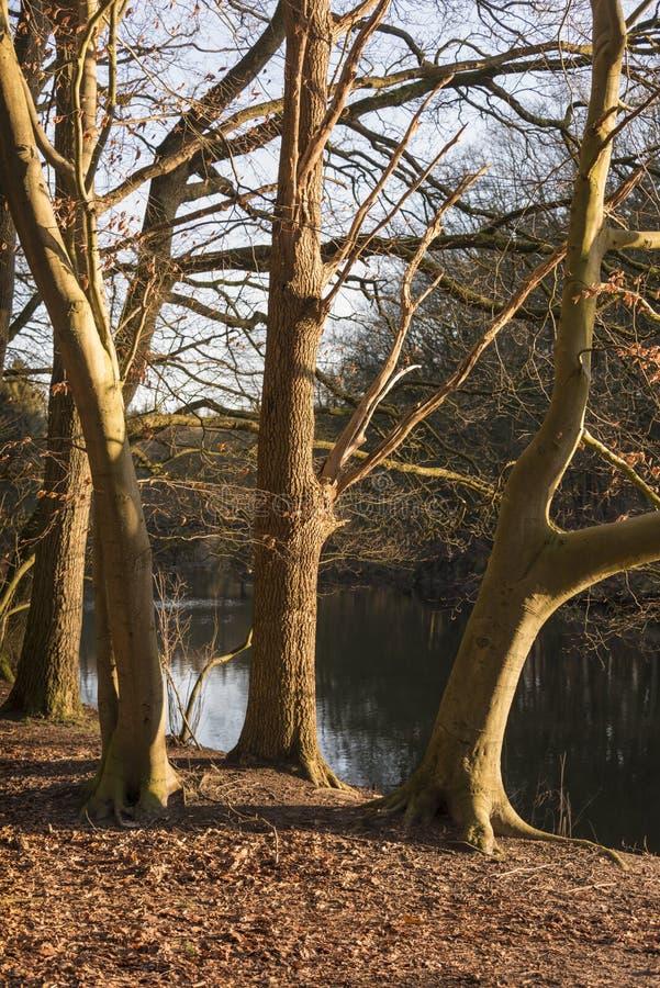 Λυκόφως στο δάσος με τον ποταμό ως υπόβαθρο στοκ φωτογραφία με δικαίωμα ελεύθερης χρήσης