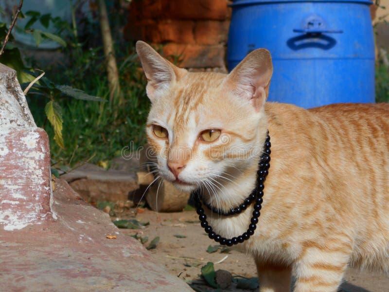 Λυπημένη γάτα μου στοκ φωτογραφίες
