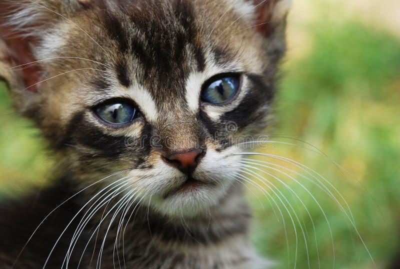 Λυπημένη γάτα στοκ εικόνες με δικαίωμα ελεύθερης χρήσης