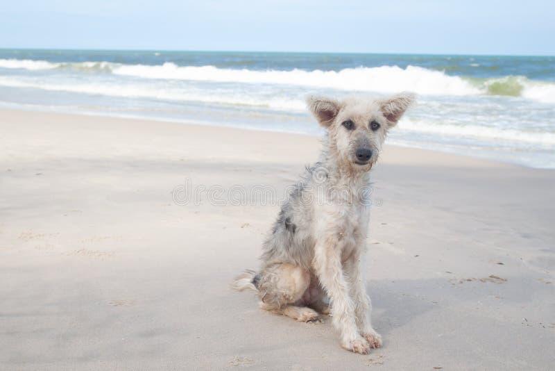 Λυπημένη συνεδρίαση σκυλιών προσώπου στην παραλία στοκ εικόνες με δικαίωμα ελεύθερης χρήσης
