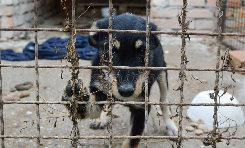 Λυπημένο εγκαταλειμμένο κουτάβι στο κλουβί στοκ εικόνες