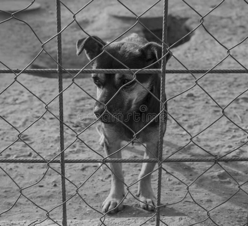 Λυπημένο κουτάβι σε ένα καταφύγιο στοκ εικόνες