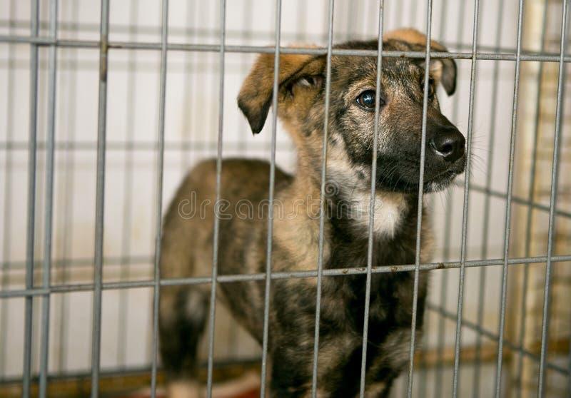 Λυπημένο κουτάβι στο καταφύγιο για τα άστεγα ζώα στοκ εικόνα