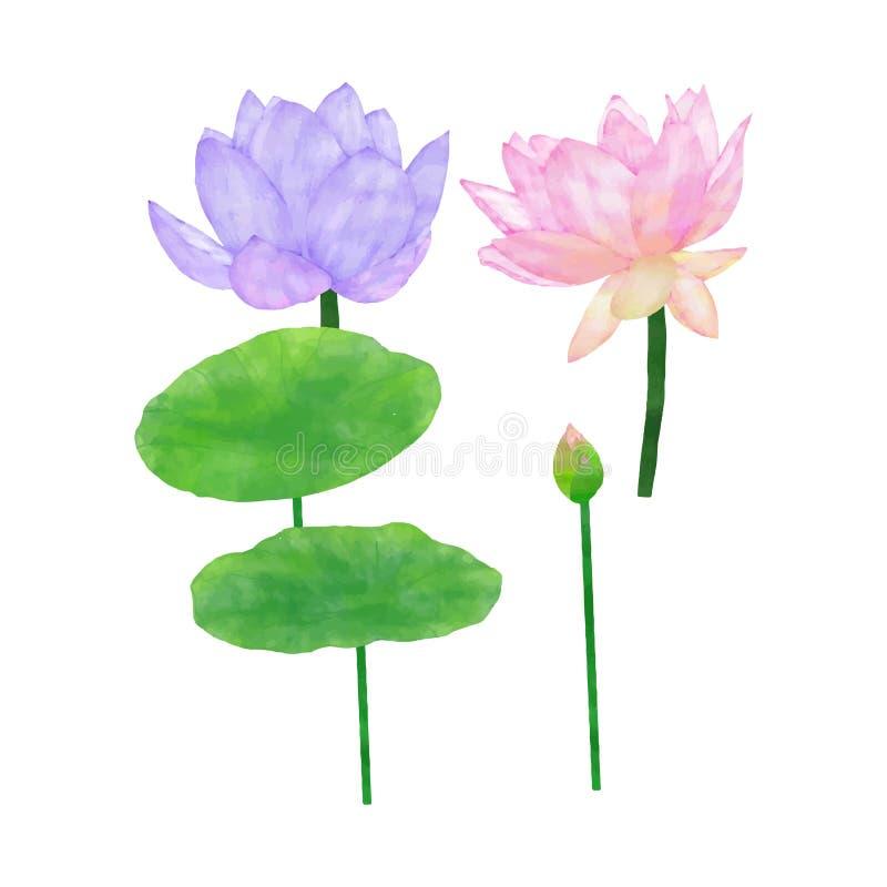 Λωτός και φύλλα Watercolor καθορισμένοι στοκ φωτογραφία με δικαίωμα ελεύθερης χρήσης