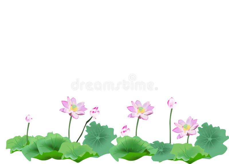 λωτός λουλουδιών διανυσματική απεικόνιση