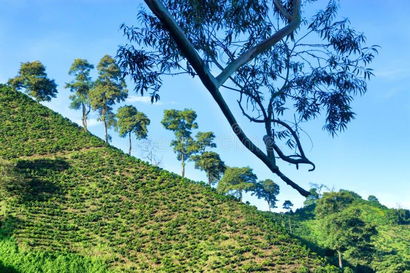 Λόφοι και ουρανός καφέ στοκ φωτογραφία