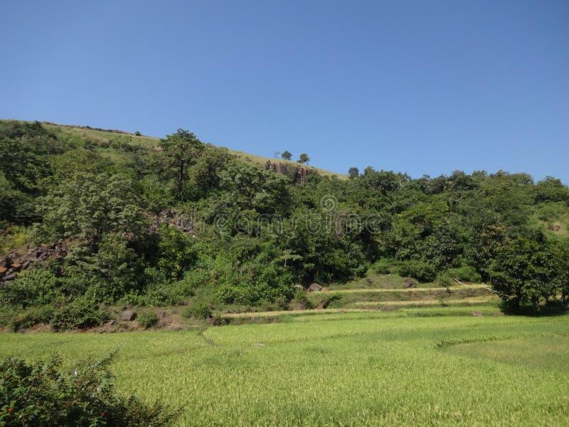 Λόφοι και σειρά βουνών, άποψη τοπίων πρασινάδων δέντρων στοκ εικόνες