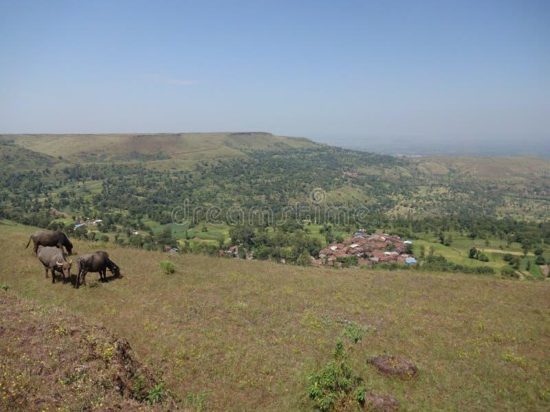 Λόφοι και σειρά βουνών, άποψη τοπίων πρασινάδων δέντρων στοκ φωτογραφία