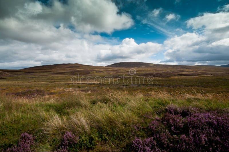 Λόφοι με το βρύο και τη χλόη στοκ φωτογραφία με δικαίωμα ελεύθερης χρήσης