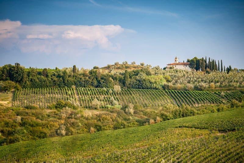 Λόφοι Chianti με τους αμπελώνες και το κυπαρίσσι Tuscan τοπίο μεταξύ της Σιένα και της Φλωρεντίας Ιταλία στοκ φωτογραφία