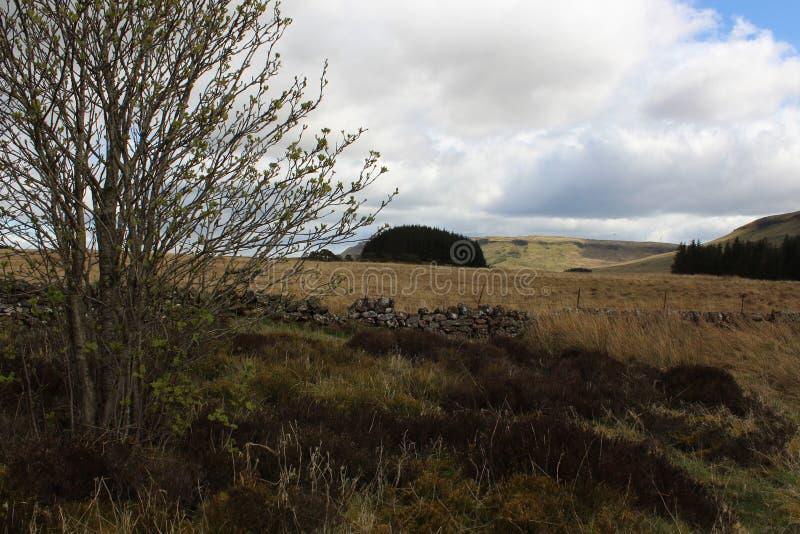 Λόφοι Fintry στοκ φωτογραφία με δικαίωμα ελεύθερης χρήσης