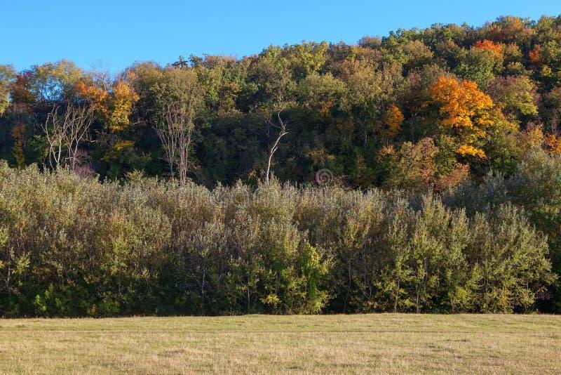 Λόφος με χρωματιστά δέντρα στοκ φωτογραφία με δικαίωμα ελεύθερης χρήσης