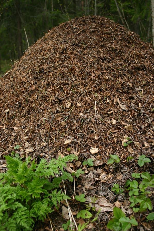 λόφος μυρμηγκιών στοκ φωτογραφίες