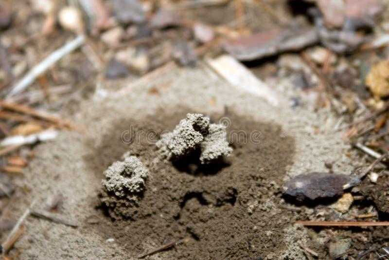 λόφος μυρμηγκιών στοκ εικόνες με δικαίωμα ελεύθερης χρήσης