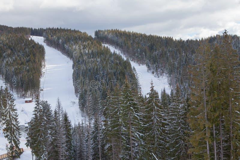Λόφος σκι στα ξύλα στοκ φωτογραφίες με δικαίωμα ελεύθερης χρήσης