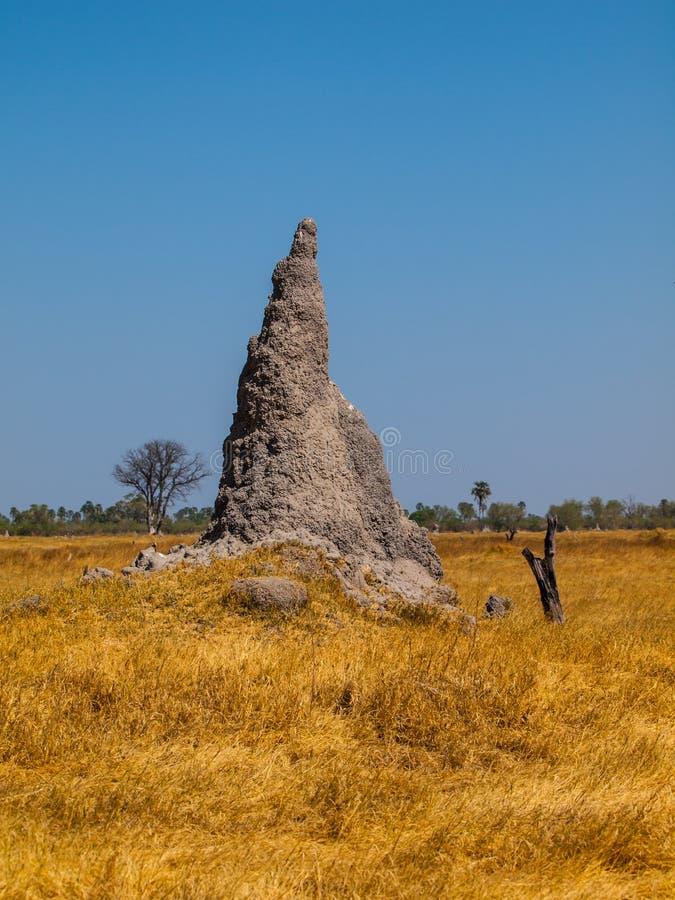 Λόφος τερμιτών στην περιοχή Okavango στοκ φωτογραφίες με δικαίωμα ελεύθερης χρήσης