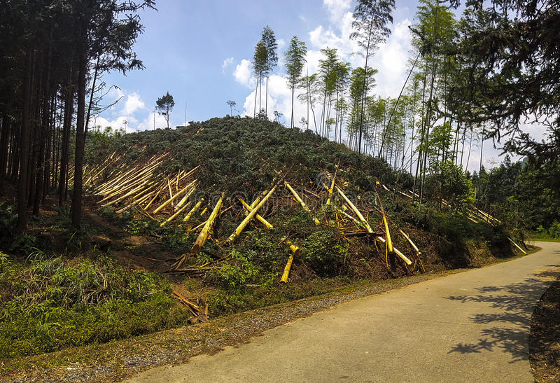 Λόφος Deforested στην Κίνα στοκ φωτογραφία με δικαίωμα ελεύθερης χρήσης