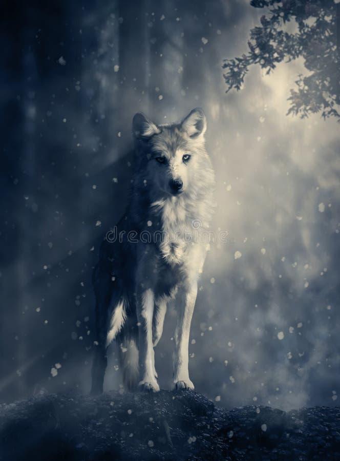 Λύκος φαντασίας στο δάσος ελεύθερη απεικόνιση δικαιώματος